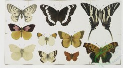 prang_cards_butterflies-00015 - 0337-Christmas and New Year cards depicting flowers and butterflies 105149