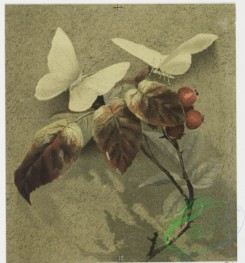 prang_cards_butterflies-00034 - 0716-Christmas cards depicting flowers, leaves, butterflies, paper, and seal with man's profile 107464