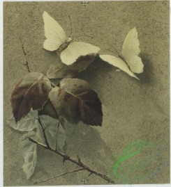 prang_cards_butterflies-00035 - 0716-Christmas cards depicting flowers, leaves, butterflies, paper, and seal with man's profile 107465