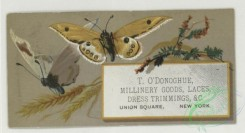 prang_cards_butterflies-00057 - 1763-Trade cards depicting butterflies, holly, flowers, plants, strawberries, cows and birch bark 103538