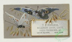 prang_cards_butterflies-00059 - 1763-Trade cards depicting butterflies, holly, flowers, plants, strawberries, cows and birch bark 103540