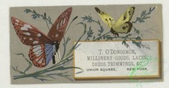 prang_cards_butterflies-00060 - 1763-Trade cards depicting butterflies, holly, flowers, plants, strawberries, cows and birch bark 103541