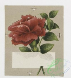 prang_cards_holidays-00024 - 0031-Greeting cards depicting flowers 104998