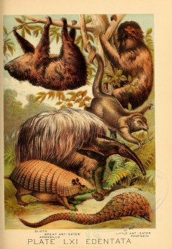 primates_best-00037 - Sloth, Great Ant-Eater, Armadillo, Ai, Little Ant-Eater, Phatagin [2284x3301]