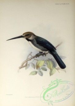 puffbirds-00024 - Three-toed Jacamar