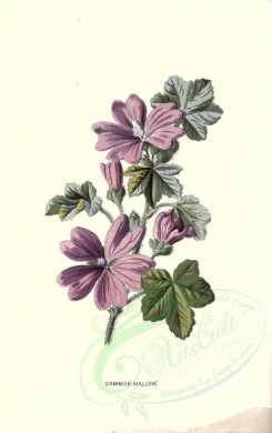 purple_flowers-00551 - COMMON MALLOW [1784x2842]