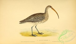 rails-00144 - Curlew