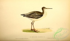 rails-00151 - Spotted Redshanks