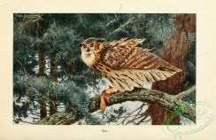 raptors-00030 - Verreaux's eagle-owl