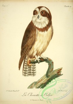 raptors-00286 - Spectacled owl