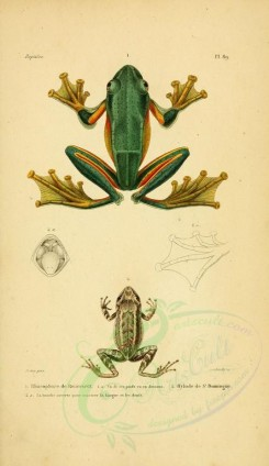 reptiles_and_amphibias-00891 - Toad, Frog, 7 [2052x3548]