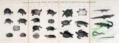 reptiles_and_amphibias_bw-00001 - 001-Turtles, Tortoises, Crocodiles