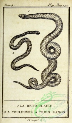 reptiles_and_amphibias_bw-00317 - 009-reticulaire (Fr), couleuvre a trois rangs (Fr)