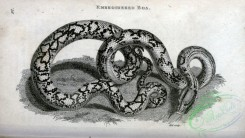 reptiles_and_amphibias_bw-00919 - 008-Rmbroidered Boa