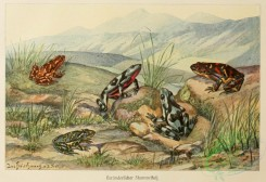reptiles_and_amphibias_full_color-00009 - Toad