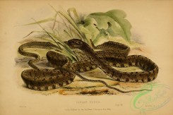 reptiles_and_amphibias_full_color-00018 - dipsas fusca