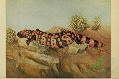 reptiles_and_amphibias_full_color-00021 - heloderma suspectum, Gila Monster