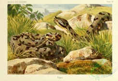 reptiles_and_amphibias_full_color-00063 - vipera aspis