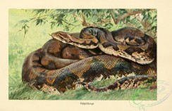 reptiles_and_amphibias_full_color-00079 - python reticulatus