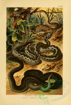 reptiles_and_amphibias_full_color-00095 - vipera berus