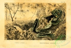 reptiles_and_amphibias_full_color-00111 - litoria luteola, trachycephalus lichenatus