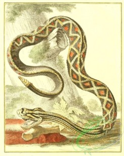 reptiles_and_amphibias_full_color-00112 - Snake, 1