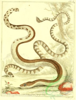 reptiles_and_amphibias_full_color-00114 - Snake, 3