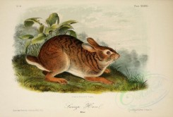 rodents-00496 - Swamp Hare [2859x1935]