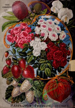 roses_flowers-01277 - 082-Tree Strawberry, Chinese Lantern, Roses, Frame