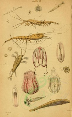 sea_animals-00119 - Corals, arthropods [1928x3118]