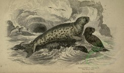 sea_animals-00189 - Grey Seal [3566x2110]