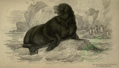 sea_animals-00200 - Sea-Lion [3630x2090]