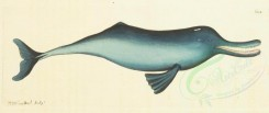 sea_animals-00320 - Gangetic Dolphin [2489x1045]