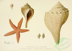 sea_animals-00629 - Starfish