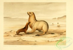 sea_animals-00631 - Seals, 2