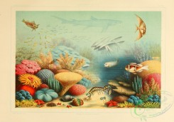 sea_animals-00637 - Corals