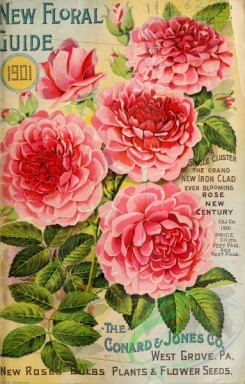seeds_catalogs-00014 - 014-Rose [3023x4730]