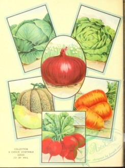seeds_catalogs-00021 - 021-Cabbage, Melon, Carrot, Onion, Radish [2528x3392]