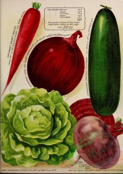 seeds_catalogs-00028 - 028-Radish, Red Globe Onion, Cucumber, Beet, Lettuce [2442x3438]