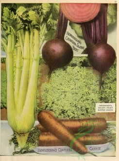 seeds_catalogs-00037 - 037-Carrot, Beet, Celery [2627x3541]