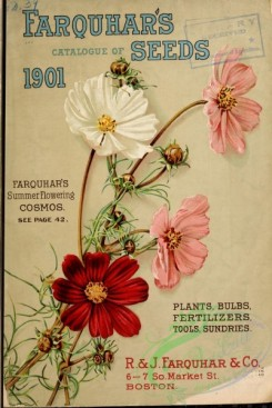 seeds_catalogs-00069 - 069-Cosmos [3221x4810]