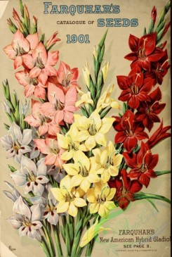 seeds_catalogs-00070 - 070-Gladiolus [3243x4821]