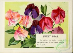 seeds_catalogs-00092 - 092-Sweet Peas [3411x2485]