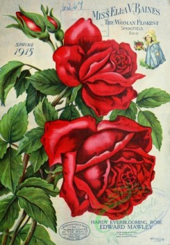 seeds_catalogs-00173 - 173-Red Rose [2243x3234]