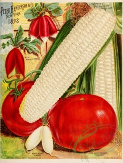 seeds_catalogs-00318 - 001-Corn, Radish, Tomato [2764x3645]