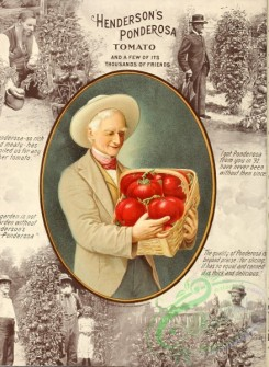 seeds_catalogs-00375 - 059-Gardener, Old man with tomatoes in basket [2700x3685]