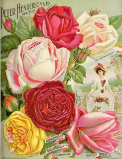 seeds_catalogs-00378 - 062-Roses, Woman in dress and hat with flowers, Frame [2809x3666]