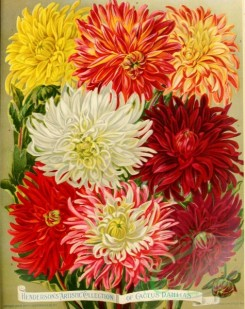 seeds_catalogs-00447 - 037-Dahlia [2849x3596]