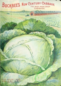 seeds_catalogs-00964 - 086-Cabbage [2545x3591]
