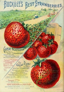seeds_catalogs-00965 - 087-Strawberry [2489x3565]